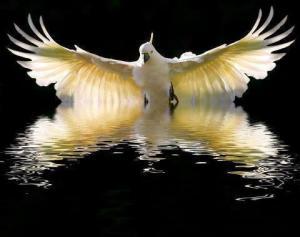 WhiteBirdWaterReflection