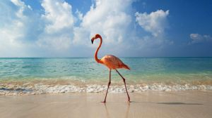 BeachFlamingo