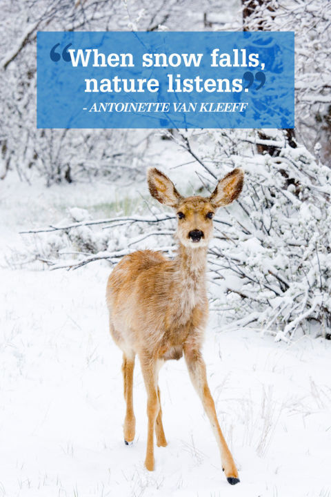 gallery-1452615236-scp-deer