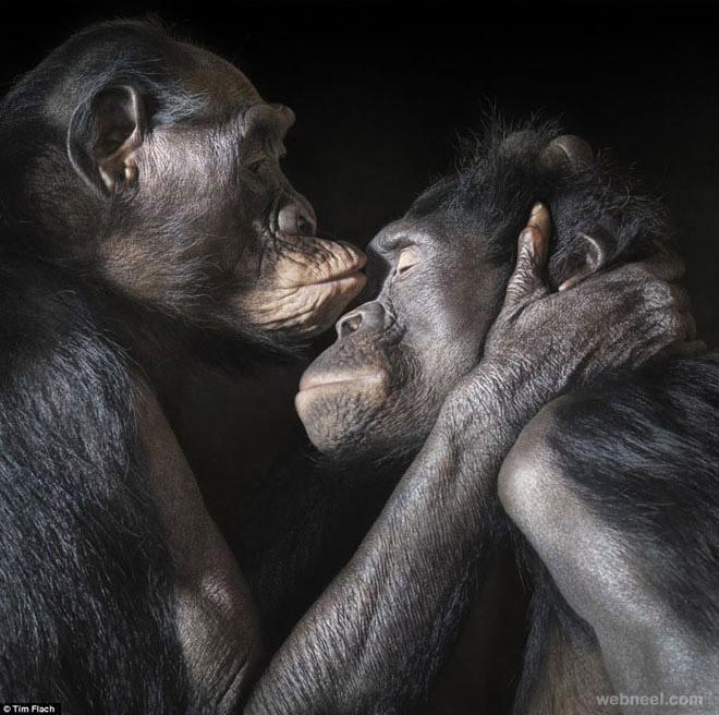 3-gorilla-photography