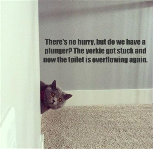 yorkie-stuck-in-toilet-funny-cat