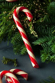 Festive Homemade Candy Canes Ready for Christmas