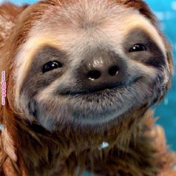 animal-sloth